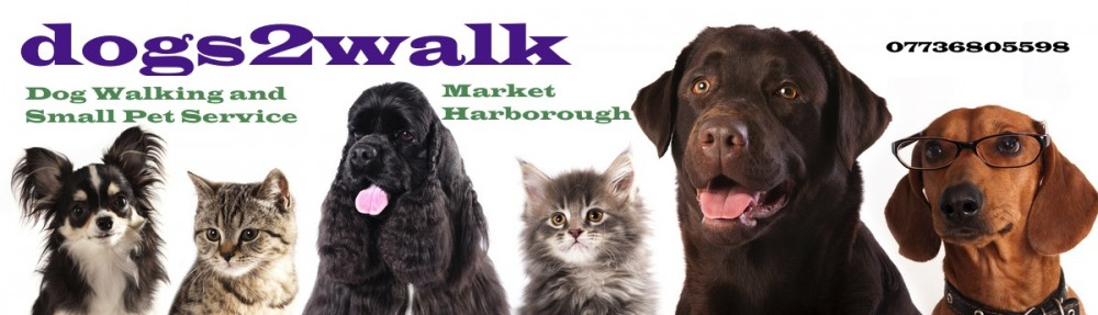 Dogs Day Out Market Harborough